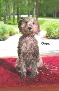 Dog on a urine drenched rug
